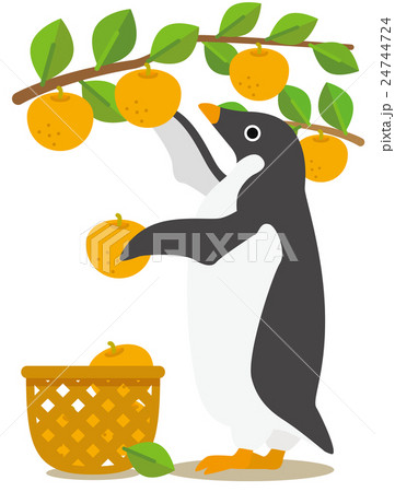 アデリーペンギン 梨狩り 24744724