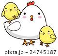 親子 鶏 鳥のイラスト 24745187