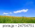 夏の水田 24754751