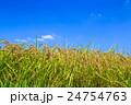 夏の水田 24754763