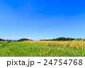 夏の水田 24754768