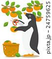 アデリーペンギン ペンギン 柿狩りのイラスト 24759625
