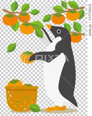 アデリーペンギン 柿狩り 24759628