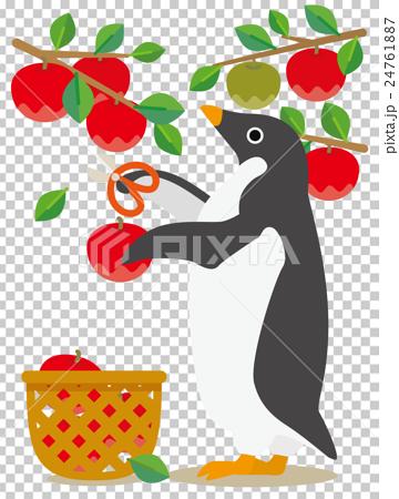 アデリーペンギンな日々 夏から秋へりんごの収穫 24761887