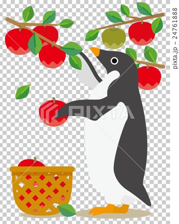 アデリーペンギン りんご狩り 24761888