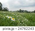 草原を望む! 24762243