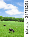 乳牛 ホルスタイン 酪農の写真 24768251