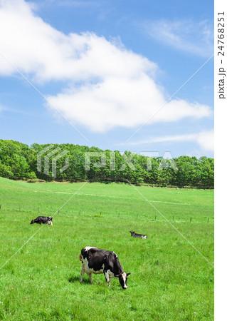 乳牛 24768251