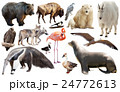 set of north american animals isolated 24772613