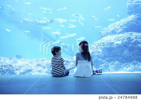 水族館 姉弟 お出かけ 24784988