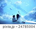 水族館でウミガメを見る姉弟 24785004