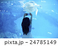 ウミガメを撮影する女の子 24785149