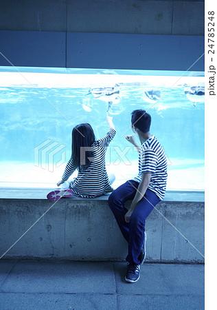 ファミリー 水族館 24785248