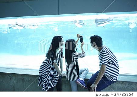 ファミリー 水族館 24785254
