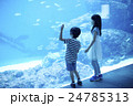水族館 子ども 24785313