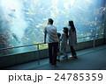 水族館 ファミリー 24785359