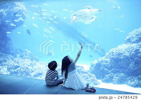 水族館でウミガメを見る姉弟 24785429