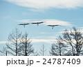青空を飛んでくるタンチョウの群れ 24787409