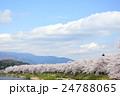 桜 桧木内川 桧木内川堤の写真 24788065