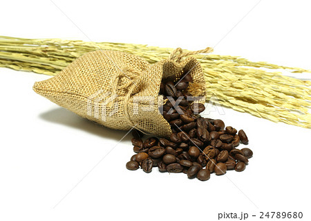 Isolated coffee beans in a sack with ear of riceの写真素材 [24789680] - PIXTA