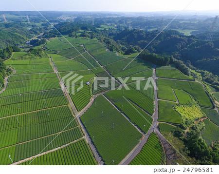 茶畑 24796581