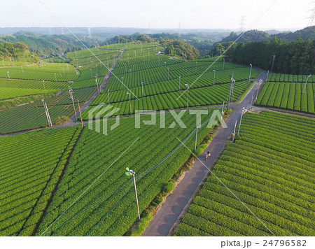茶畑 24796582