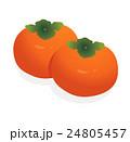柿 24805457