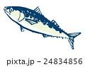 鯖 青魚 魚のイラスト 24834856