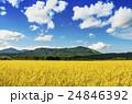 秋の田園風景 24846392
