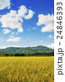 秋の田園風景 24846393