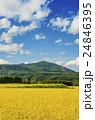 秋の田園風景 24846395