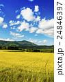 秋の田園風景 24846397