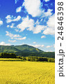 秋の田園風景 24846398