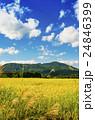 秋の田園風景 24846399