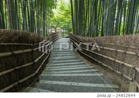 京都 初秋の化野念仏寺 竹林の階段 24852644
