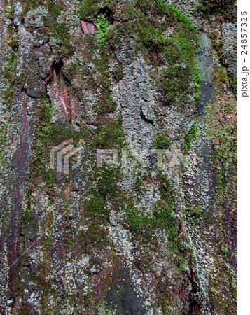 とても癒される木の自然な表情は魅力的なデザイン風景(素材・背景・サーフェス・模様) 24857326