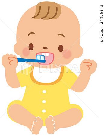 歯磨きをする赤ちゃん 24866243