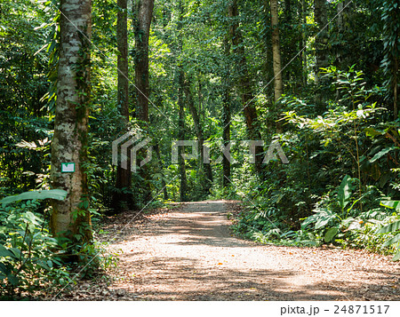Walking trail in forest at Koh Kood 24871517