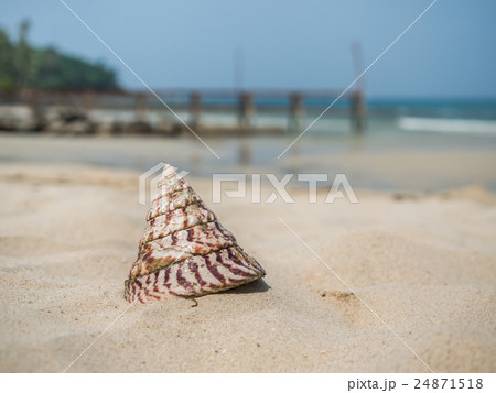 Sea shell on the beach 24871518