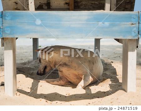 Dog hiding from sunshine 24871519