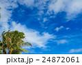 南国 椰子の木 椰子の写真 24872061