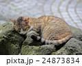 野良猫 24873834