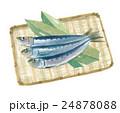 魚 青魚 鰯のイラスト 24878088