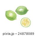 レモン 檸檬 グリーンレモンのイラスト 24878089