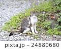 野良猫 24880680