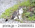 野良猫 24880681