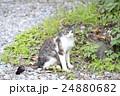 野良猫 24880682