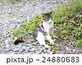 野良猫 24880683