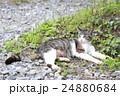 野良猫 24880684