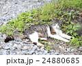 野良猫 24880685